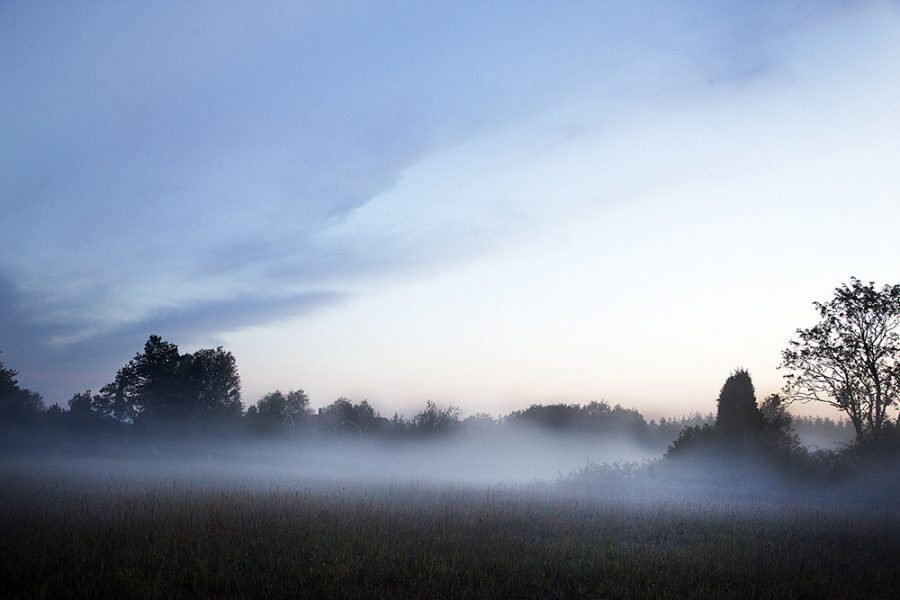 11.MG_3609 natur dimma ekeby